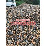变压器鹅卵石批发 鹅卵石过滤器 天然耐磨鹅卵石 河卵石 雨花石