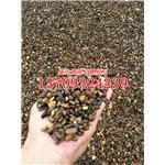 各种规格天然鹅卵石价格 福建天然鹅卵石批发